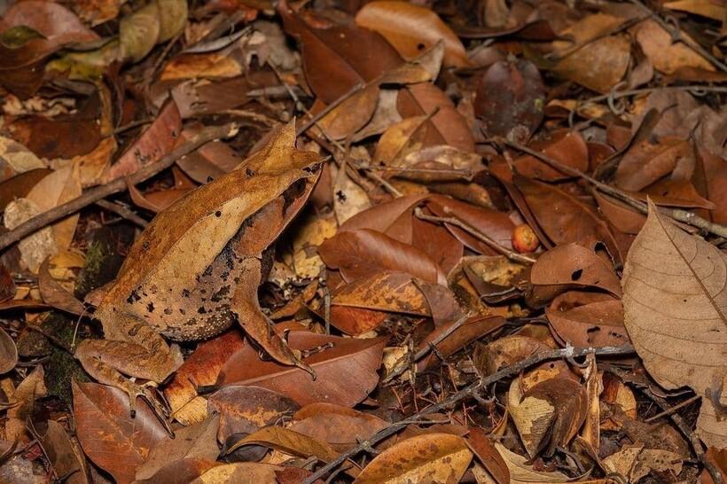 Глаза у лягушки очень выразительные, если удастся их разглядеть