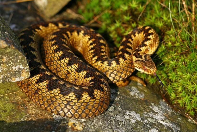 Змея на камне