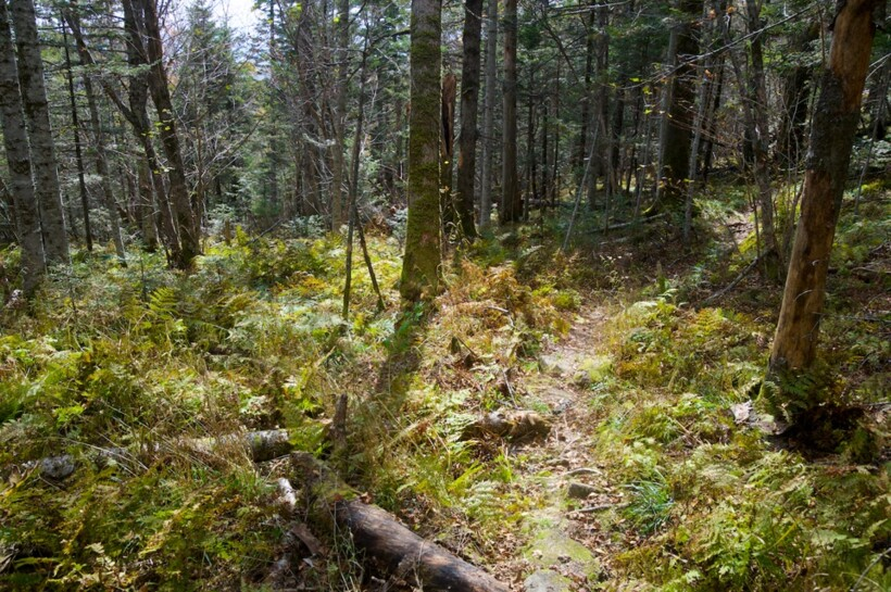 Хвойный лес на горе