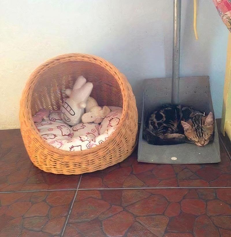 16 забавных примеров кошачьих кроватей, которые заставляют поражаться логике котов