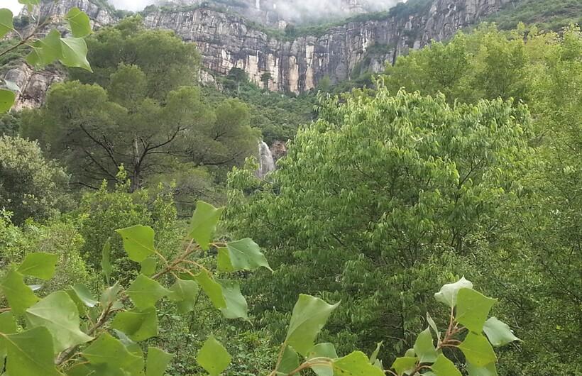 Растительность Монсеррат