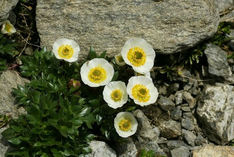 Растительность на склонах Галлхёпиггена