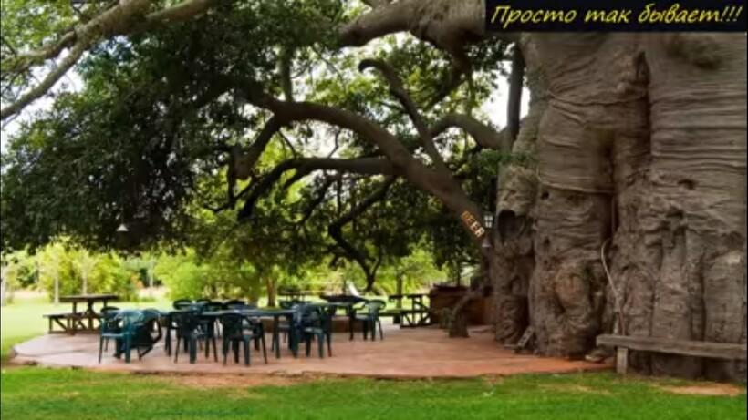 Видео: С виду обычное дерево, но внутри него — удивительный паб
