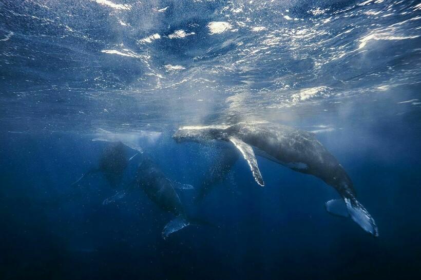 Предкам китов пришлось вернуться в воду, а не как многим другим видам неизменно находиться в ней