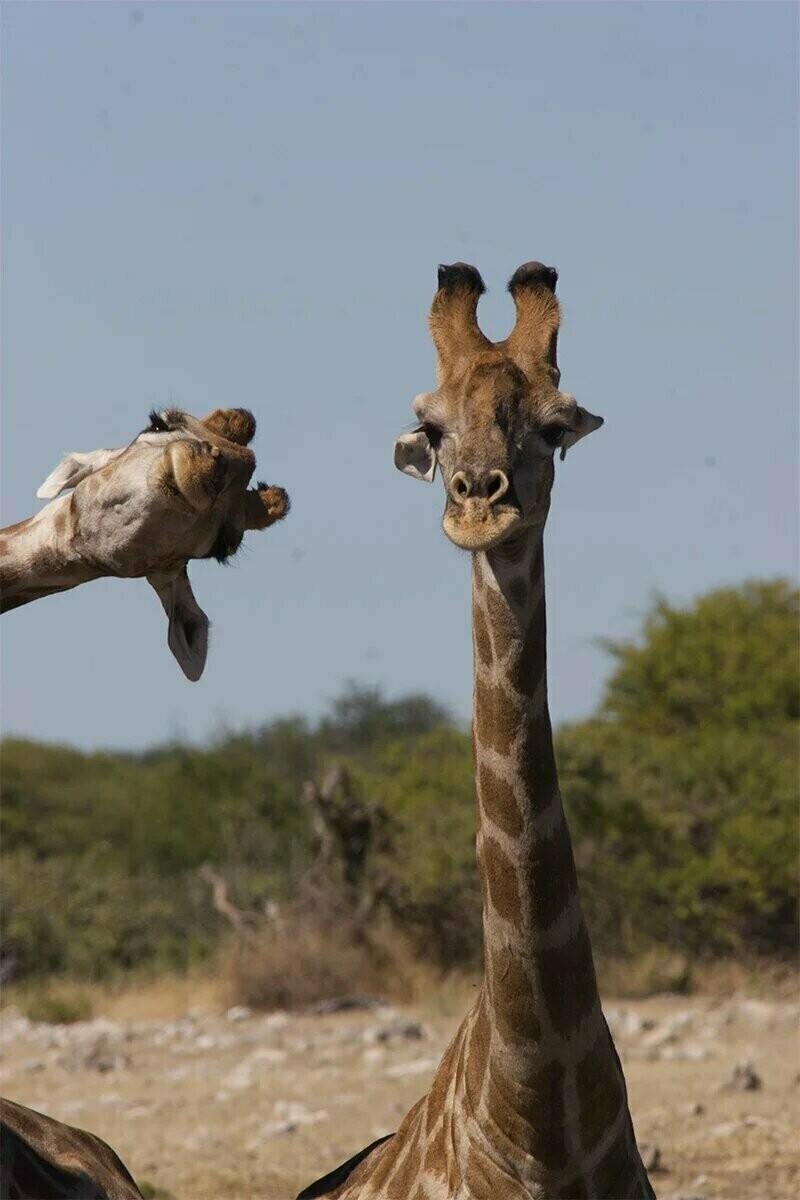 15 забавных фото животных, которые поднимут настроение на весь день