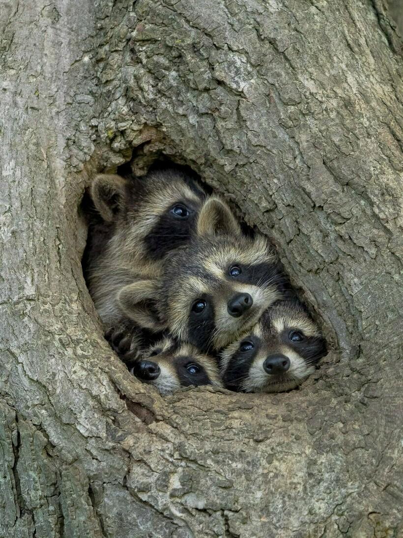 11 фотодоказательств, что дикая природа может быть невероятно смешной