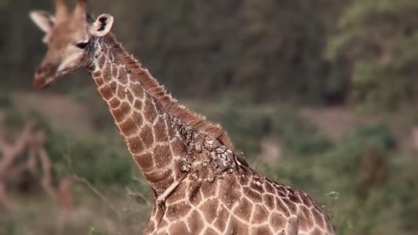 Видео: Как так получается, что животные превращаются в деревья