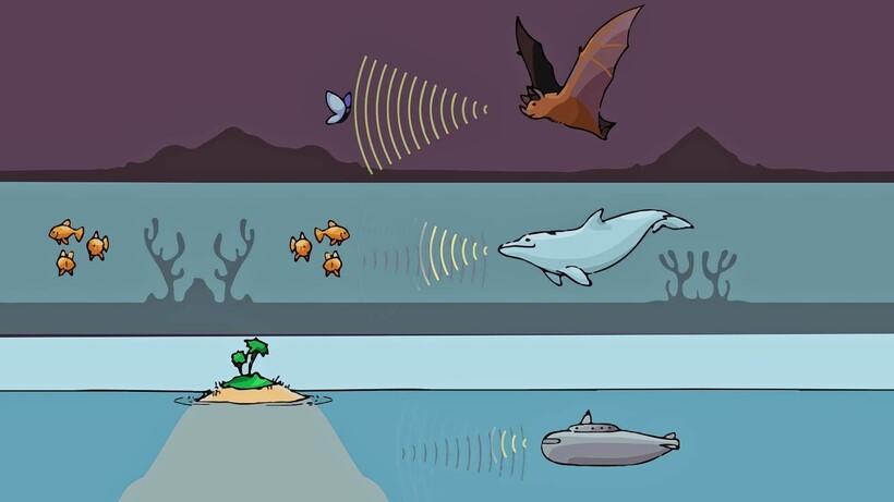Эхолокация есть у китов, у летучих мышей и у дельфинов