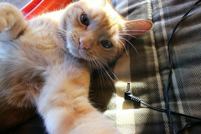 Короли Instagram: 12 забавных селфи, сделанных котами