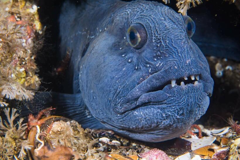 15 морских существ, в реальность которых сложно поверить