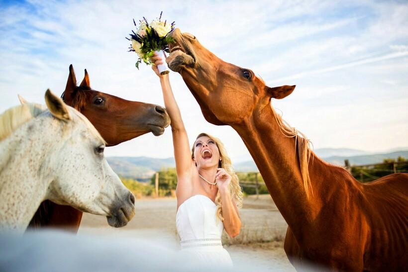 15 свадебных фото, на которых вдруг появились животные и забрали себе все внимание