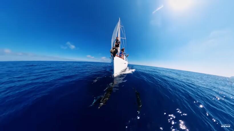 Видео: Как морская прогулка в компании дельфинов принесла парню $5000