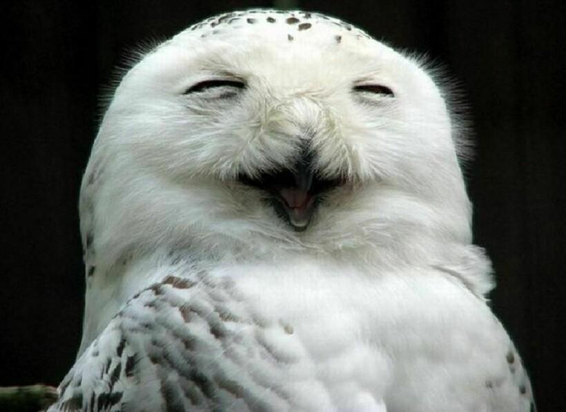 СеШельские Острова - Страница 37 Owls_1