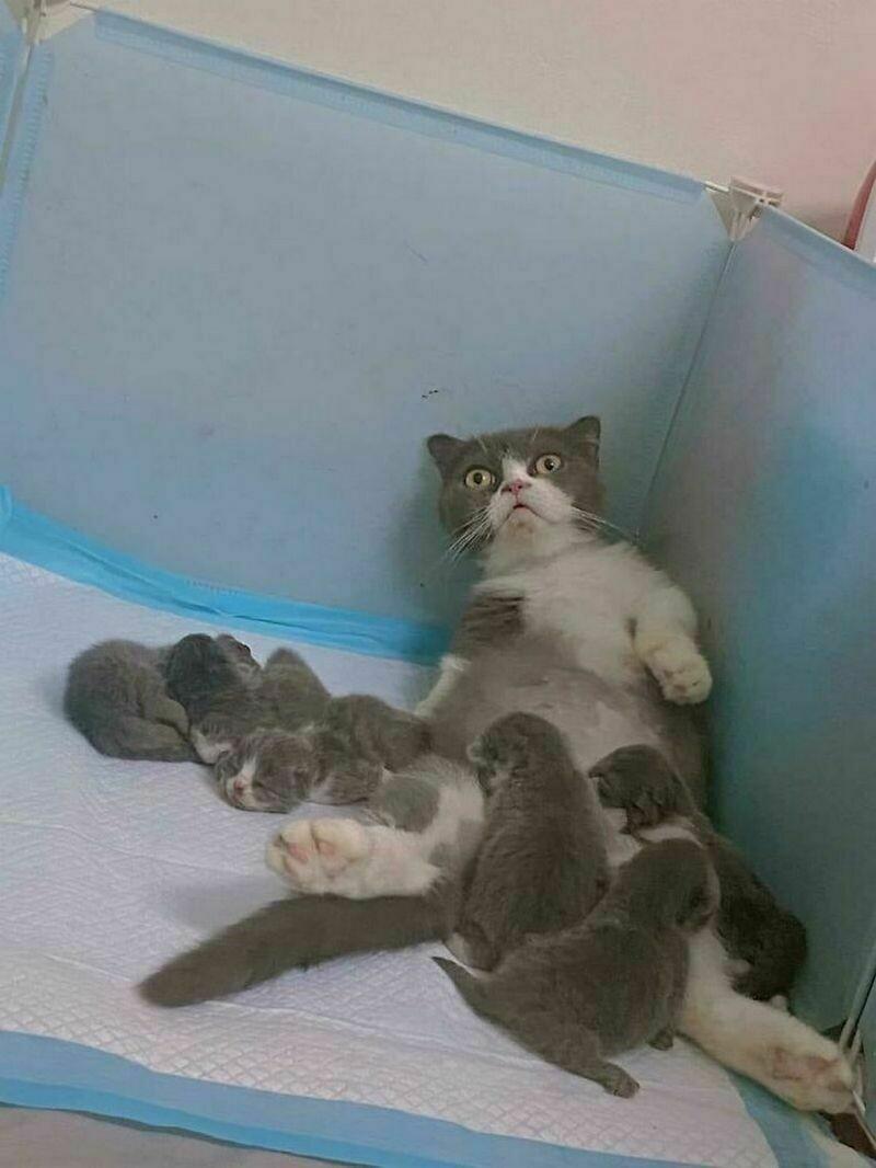 17 уморительных снимков котов, которые занимаются дуракавалянием