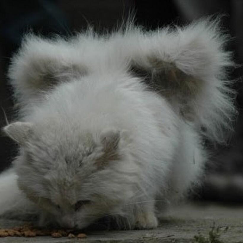 Фото: animalworld.com
