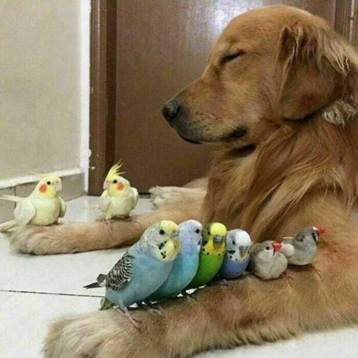 11 жизнерадостных животных, которые поднимут настроение любому