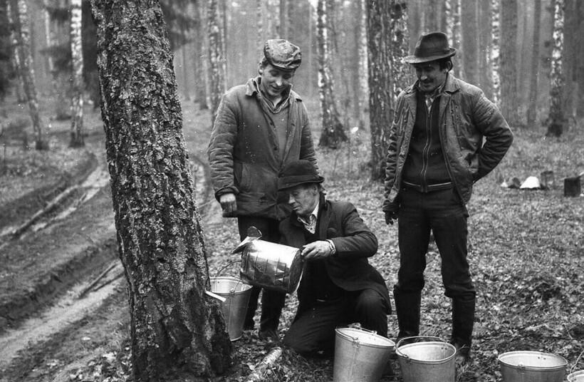 Процесс добычи сока. Фото: Валерий Бысов, 1986 год