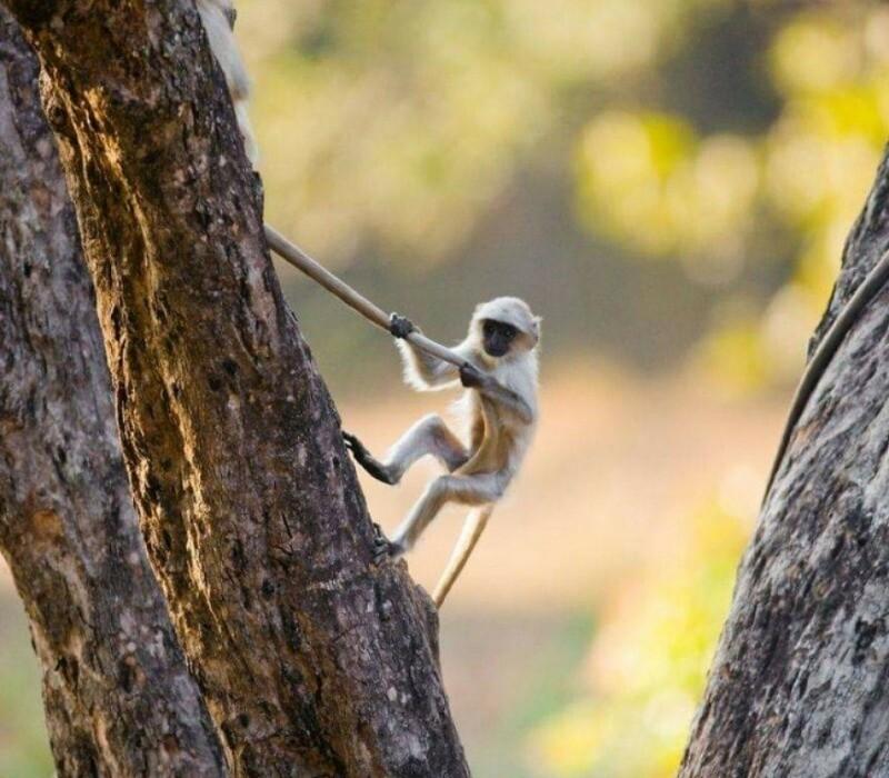 Чем они заняты, пока никто не видит: 10 забавных снимков дикой природы