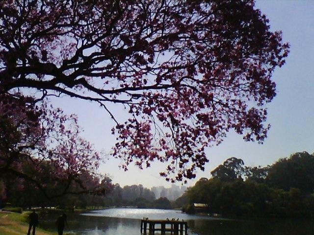 Парк Ибирапуэра