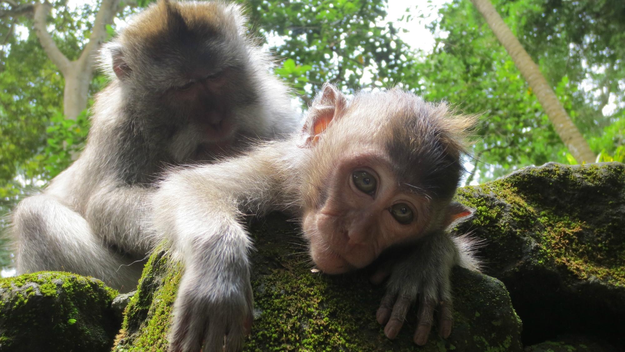 """Парк и храм """"Священный лес обезьян"""""""