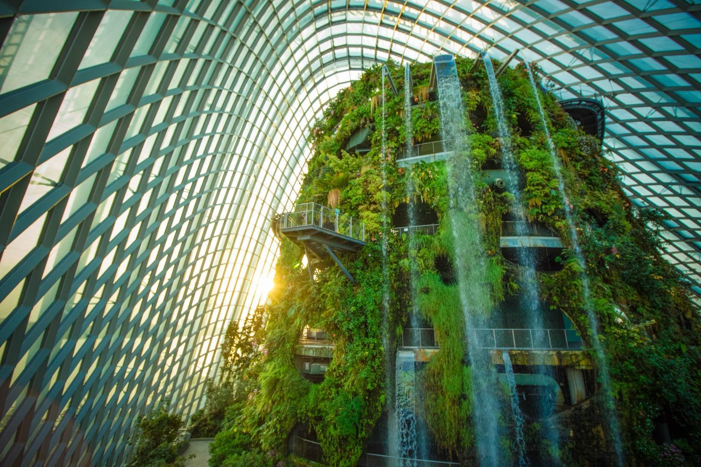 Ботанический сад «Облачный лес»