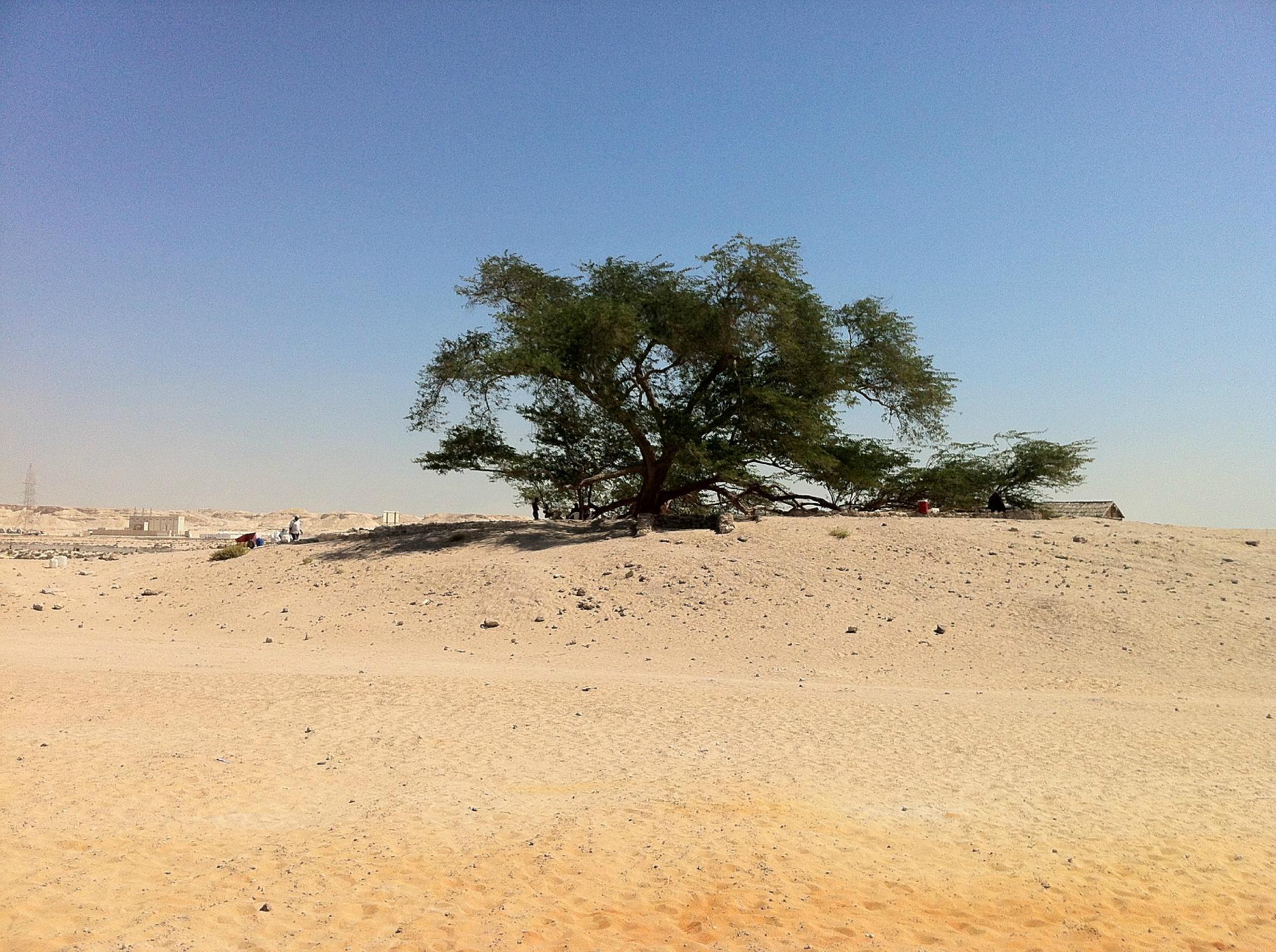 Дерево жизни (Shajarat al-Hayah)