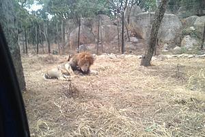 Парк львов и гепардов
