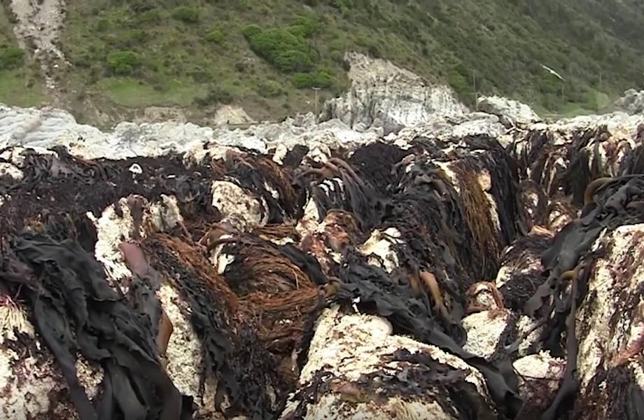 Землетрясение в Новой Зеландии превратило дно океана в сушу! Невиданные последствия!