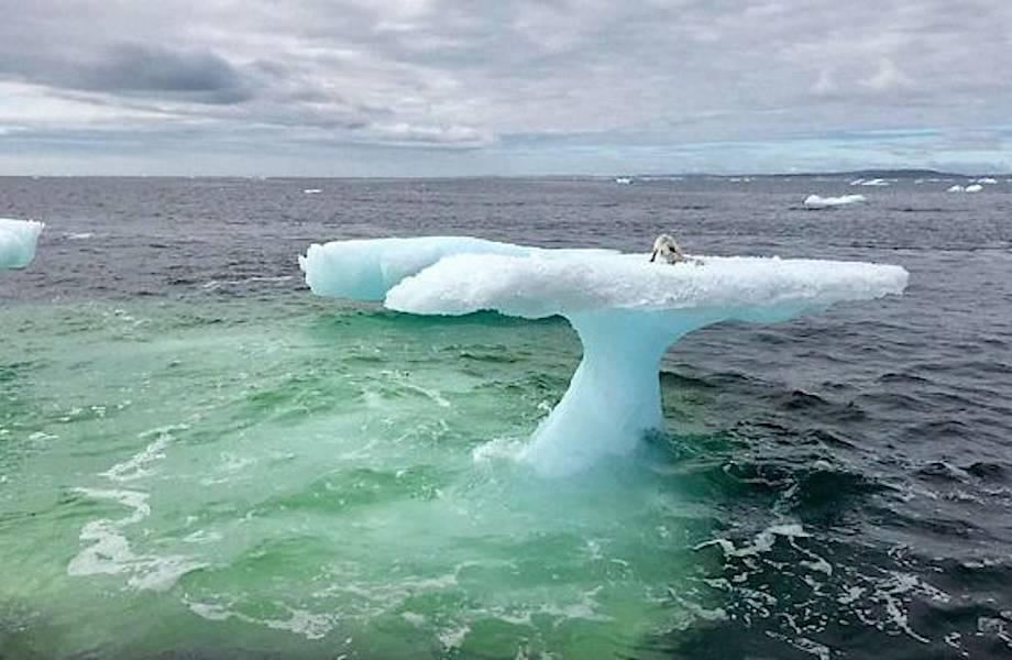 В Канаде рыбаки обнаружили песца, плавающего на льдине посреди холодного океана
