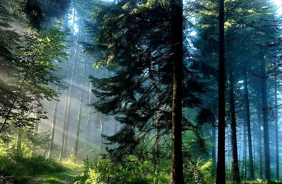 Восьмилетний мальчик установил в лесу скрытые камеры, и его открытие удивило ученых