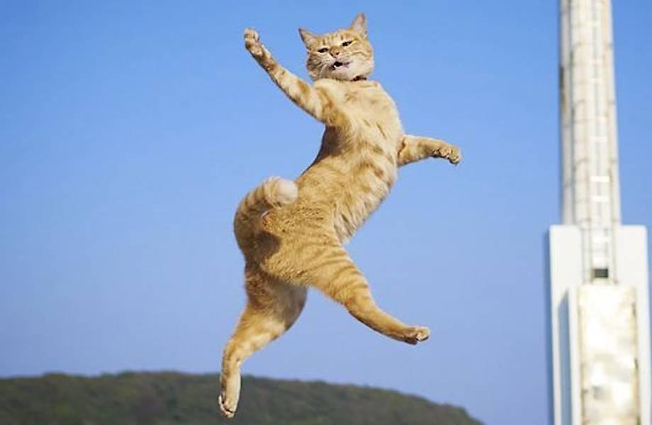 20 снимков зажигательно танцующих котов, от которых жизнь становится лучше