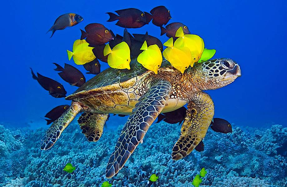 От глобального потепления и людей больше страдает морская фауна, чем обитатели суши