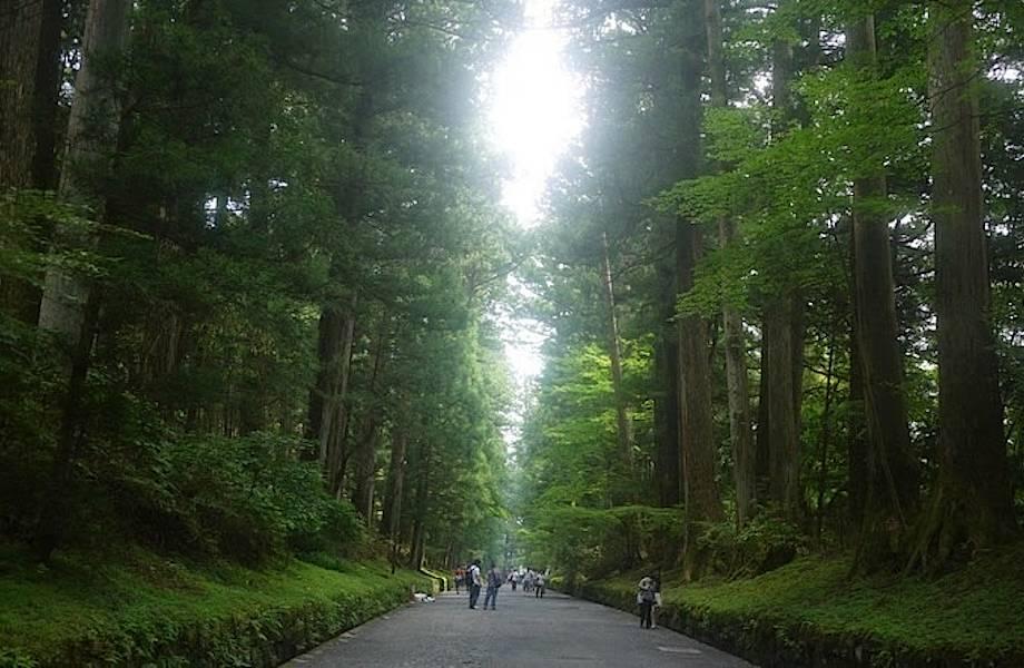 37 километров деревьев: кедровая аллея Никко — особый памятник природы Японии