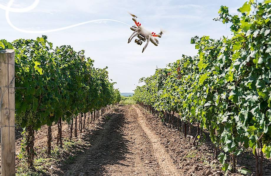 Бесценные сотрудники: как дроны помогают выращивать лучший виноград