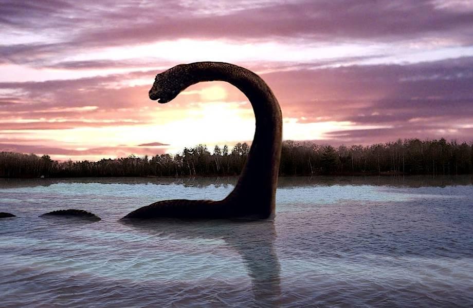 Конец мифу про Лох-Несское чудовище, оказавшееся обычной рыбой