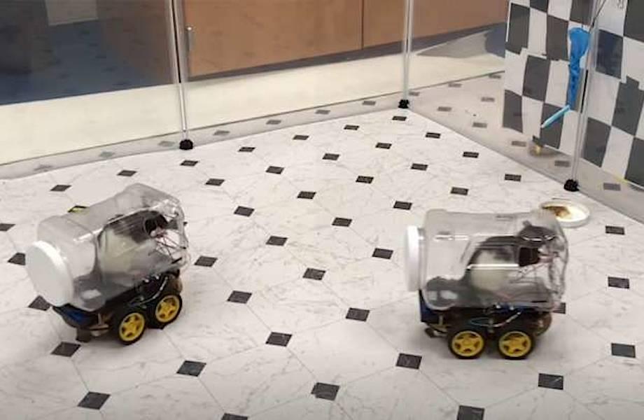 Крысы сами научились ездить на машинах и весьма удивили биологов