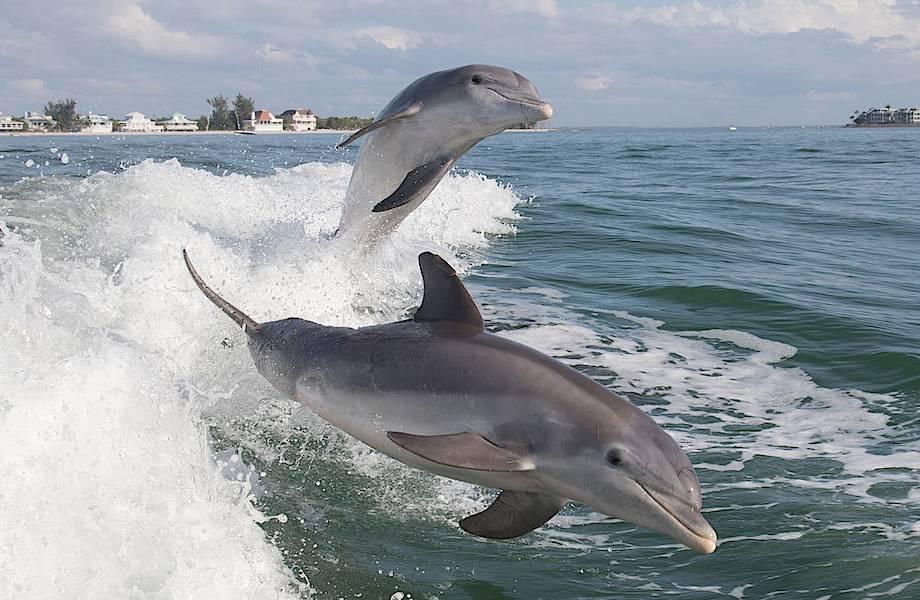 Найден способ, который позволит избежать напрасного вылова морских животных