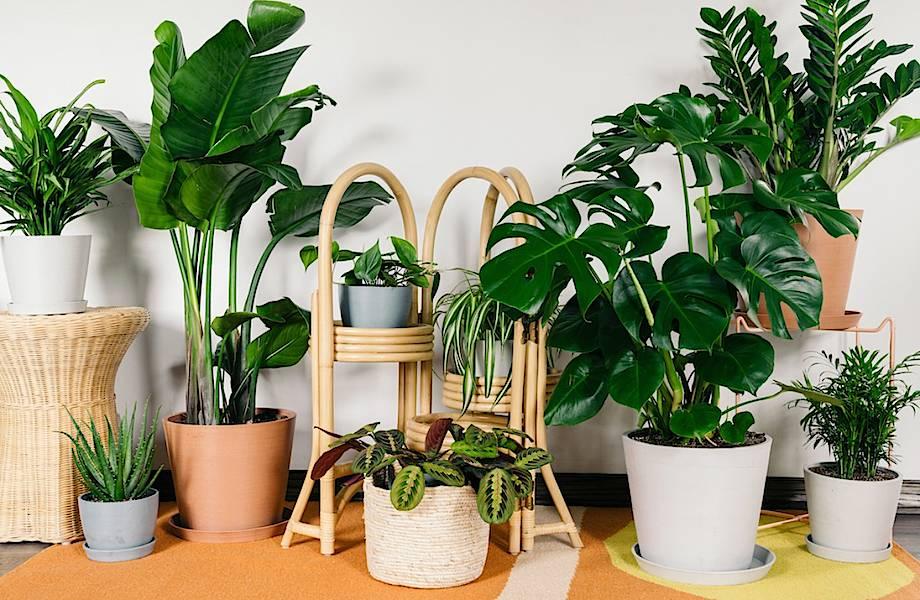 Видео: Парень снял на камеру, что делают растения, пока его нет дома