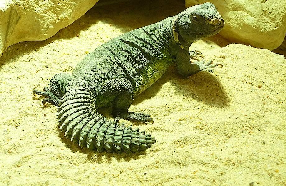 Видео: Зачем ящерицы сдают жилье скорпионам, а самки богомолов обманывают самцов