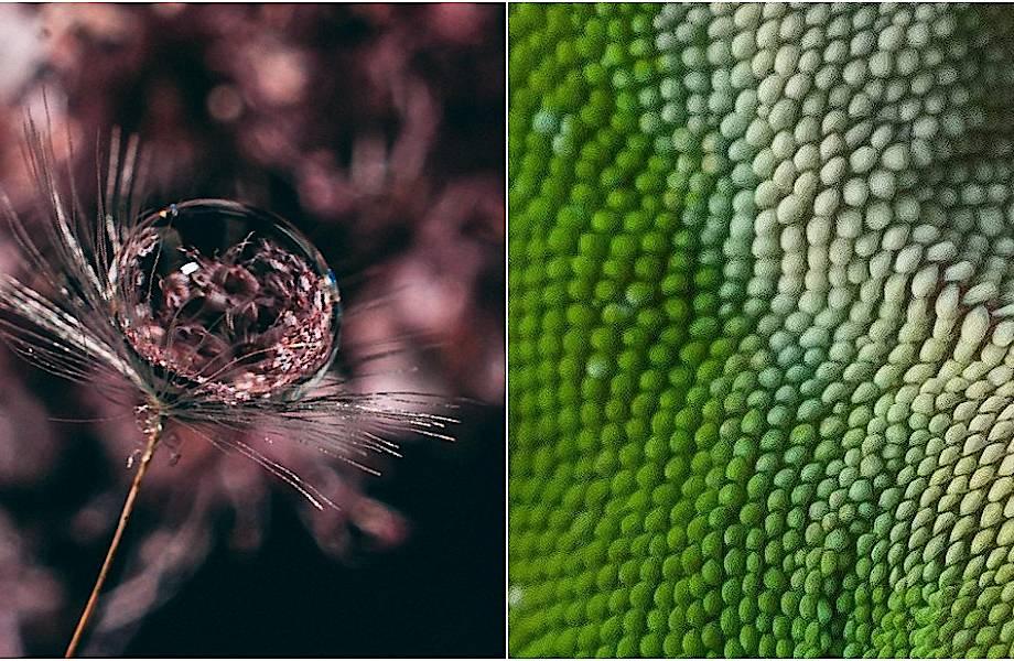 15 удивительных макрофотографий, позволяющих увидеть красоту в привычных вещах