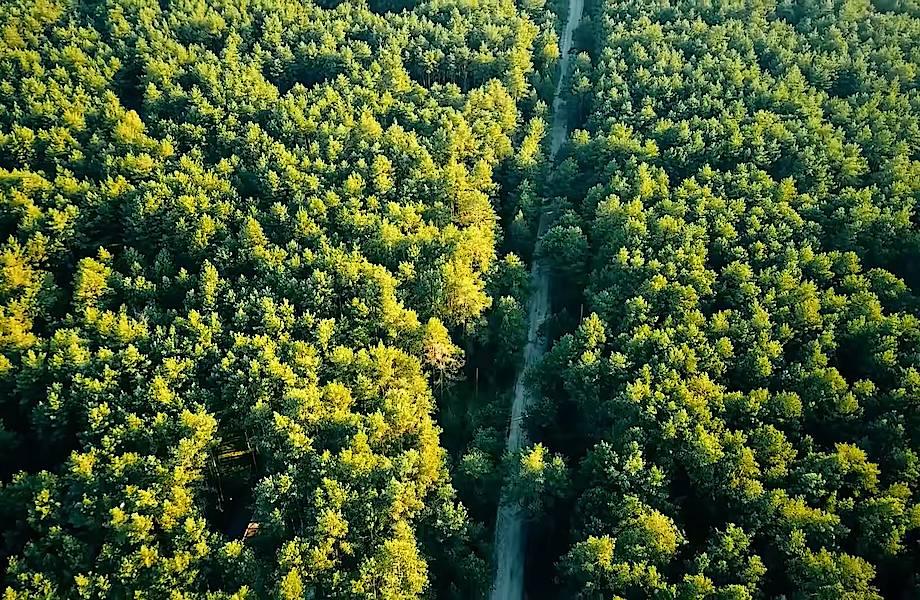 Видео: Зачем китайцы хотят высадить 100 миллиардов деревьев к 2050 году