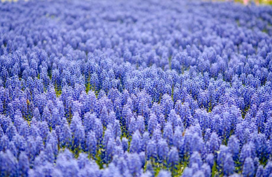 Как появился синий цвет, и почему его так мало в природе