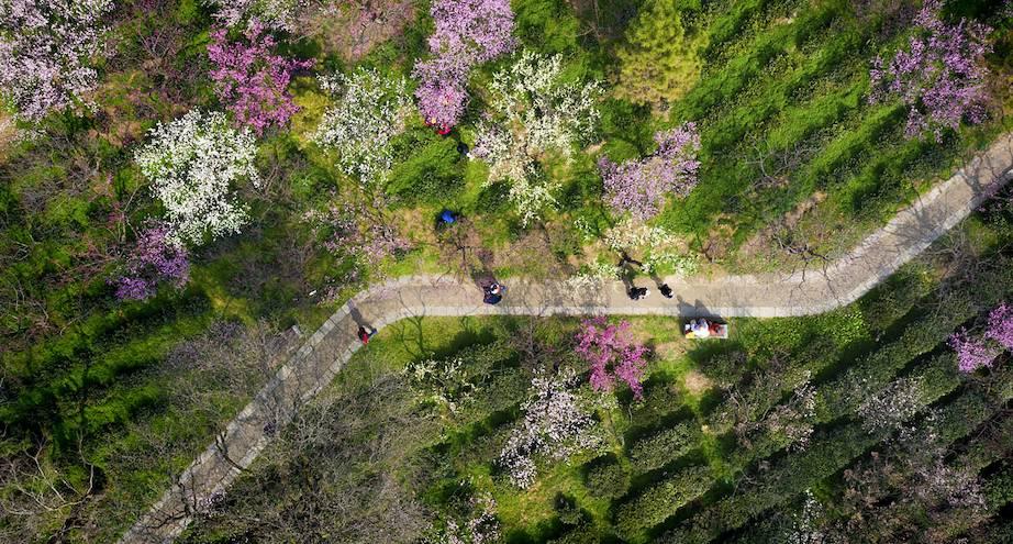 Фото дня: фестиваль весны в Китае