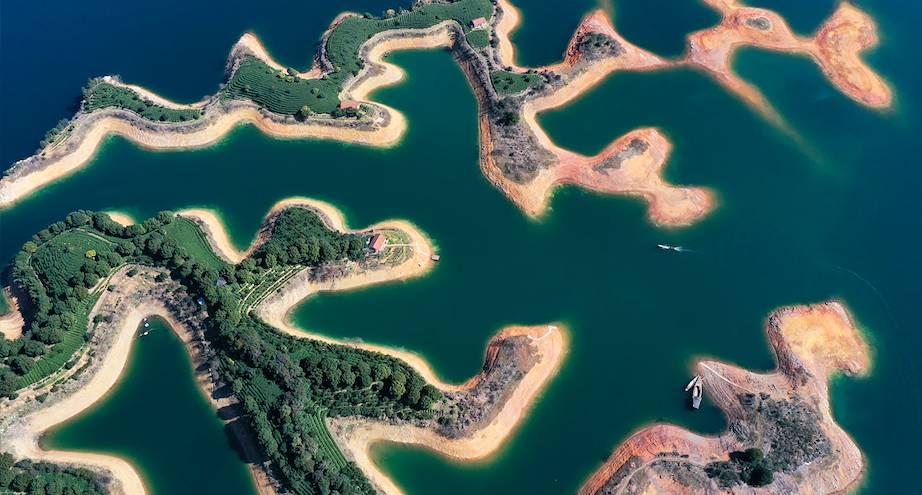 Фото дня: плантации китайского чая прямо посреди озера
