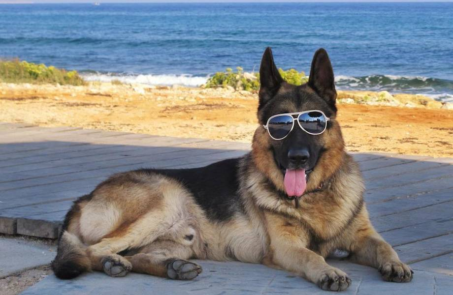 Гюнтеры: самая богатая собачья семья, которая купила особняк Мадонны