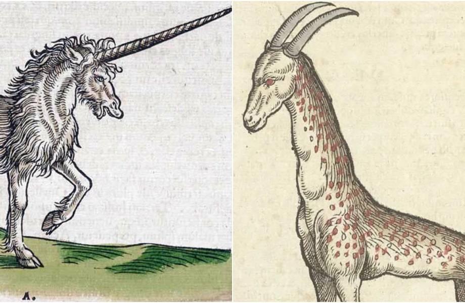 Единорог и слон со странным хоботом: 10 забавных рисунков животных из книги XVI века