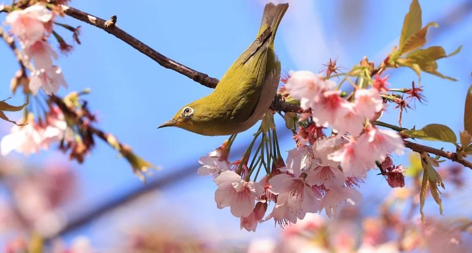 Фото дня: весна в Японии