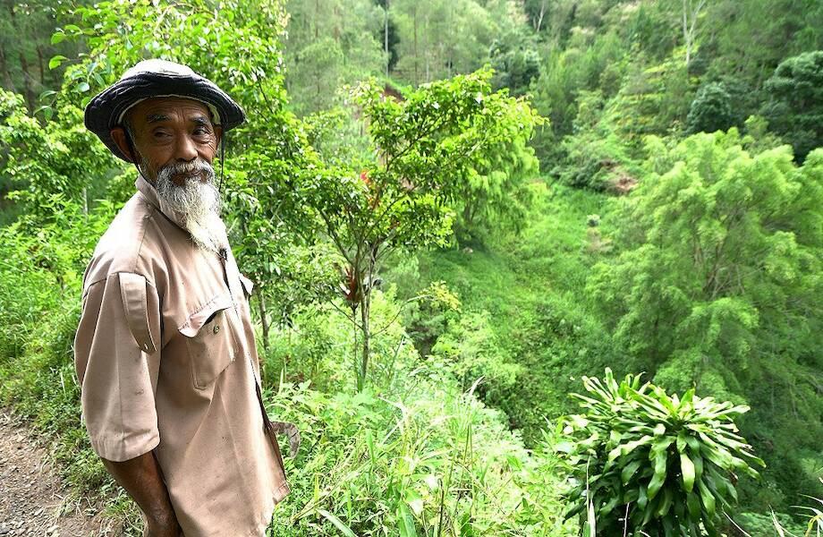 Индонезиец превратил засушливую пустошь в зеленый лес за 24 года