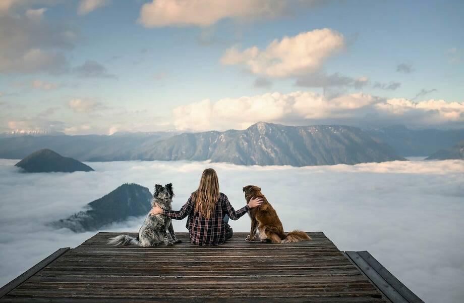 Фотограф спасла собак с улицы и теперь показывает им мир: 16 их снимков из Норвегии