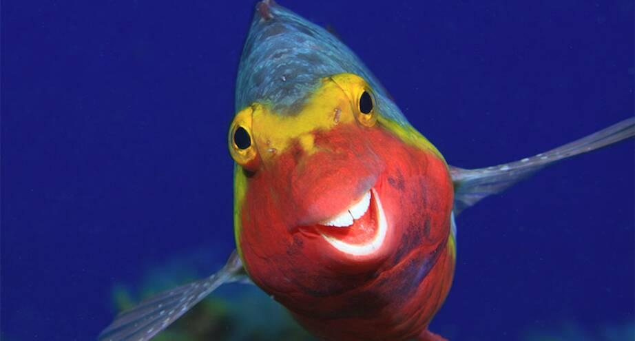 Фото дня: рыба, которая познала секреты счастья